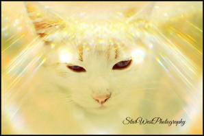 Angel Aurora