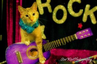 Amazing Acro-Cats!